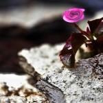 Iman Seteguh Bukit Batu