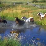 Berpacu Melawan Kuda