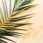 Minggu Palma: Menantikan Pemulihan Dunia dalam Doa
